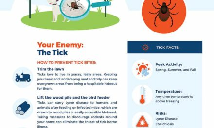 Summer Pest Activity in Your Backyard