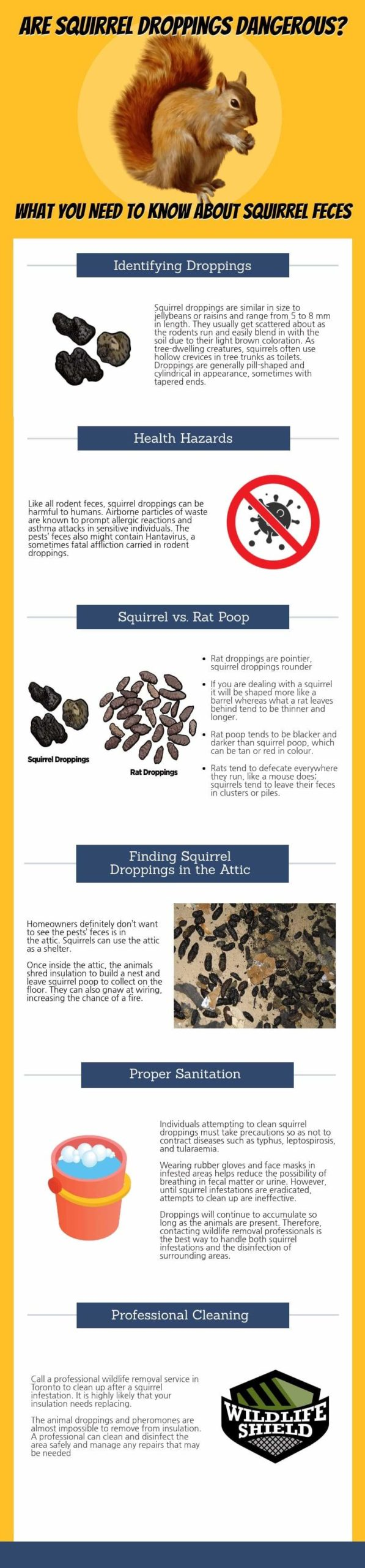 Are-Squirrel-Droppings-Dangerous