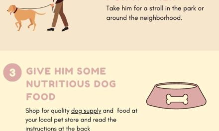 How to care for your New Dog