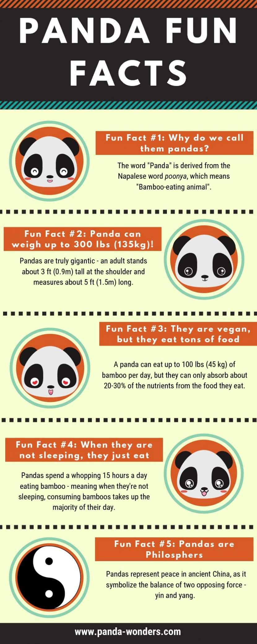 adorable-facts-about-pandas